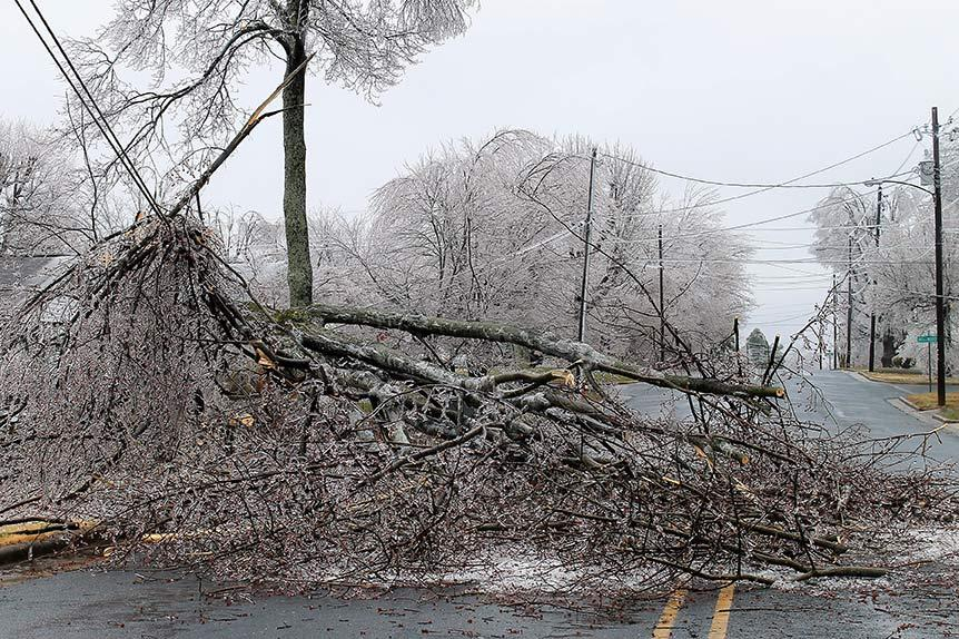 frozen tree that fell on the side of a road